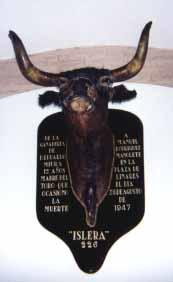 Bull bust at Seville's bullring museum.