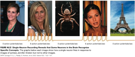 The Jennifer Aniston neuron.